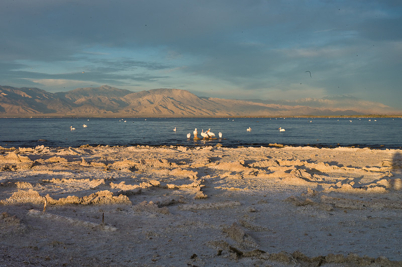 This is also a nesting bird sanctuary with many, many pelicans and terns.