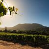 Groot Constantia vineyards