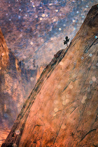 Lone Pine on Quarter Dome, Yosemite National Park