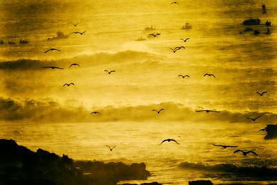 Seagulls at Sunset, Pillar Point, Mavericks, California