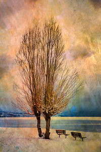 Winter Poplars and Benches, Lake Tahoe