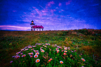 Point Cabrillo Light Station and Sea Daisies, Mendocino Coast