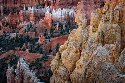 White-Capped Hoodoos