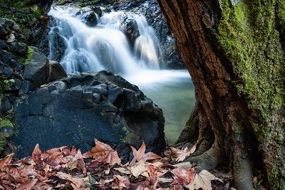 Dried Leaves and Falls