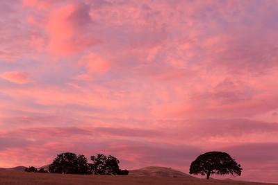 The pink hues of dusk provides a warm plaette over rolling hills and oaks of San Benito County, California, USA.