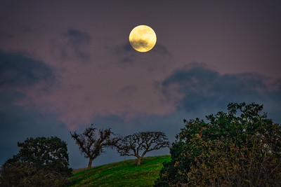 Full Moon Rising Over Oaks, Santa Calra Valley