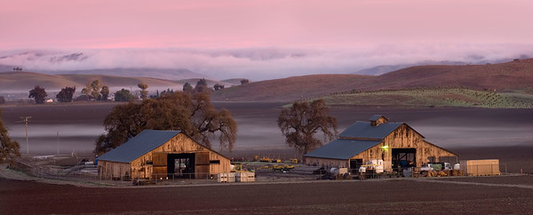 Ground fog hovers low in a rural farm setting in southern Santa Clara Valley, Monterey Bay Area, California, USA