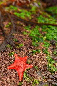 Resting Starfish