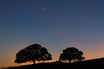 A crescent moon and Venus hang over two oaks along a ridge of the Diablo Mountains, San Benito County, California, USA.