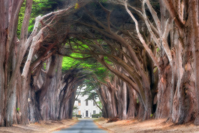 A cypress tree tunnel leads to old RCA Communications building on a foggy day, Point Reyes National Seashore, California , USA.