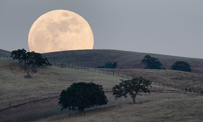 A full moon rises over rolling oak-lined hills, San Benito County, California, USA.