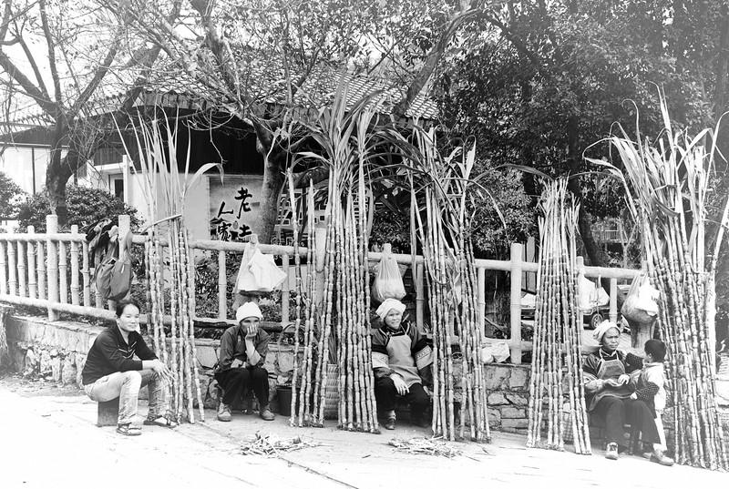 Selling Sugar Cane