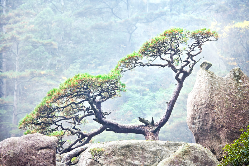 Tree in Rocks_E8Z3137