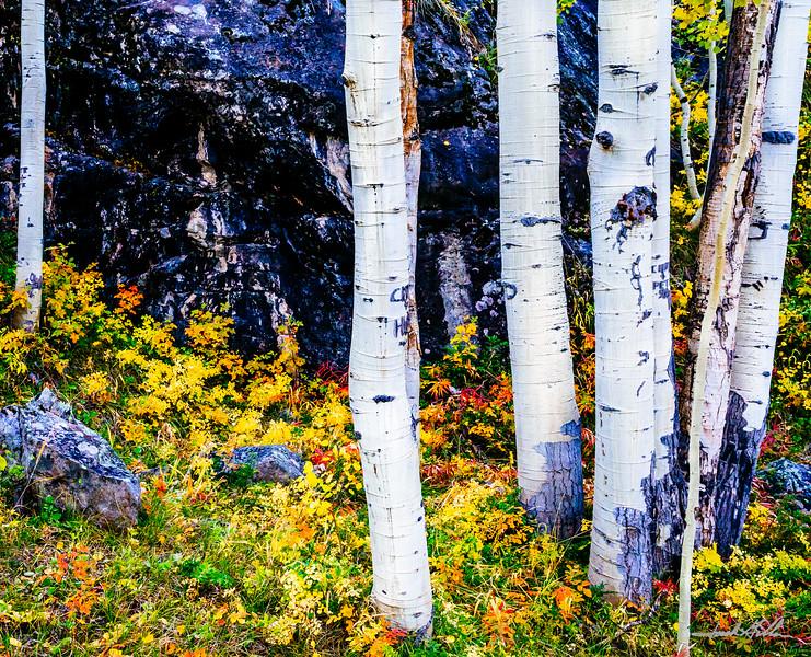 Fall Colors on mountain hillside