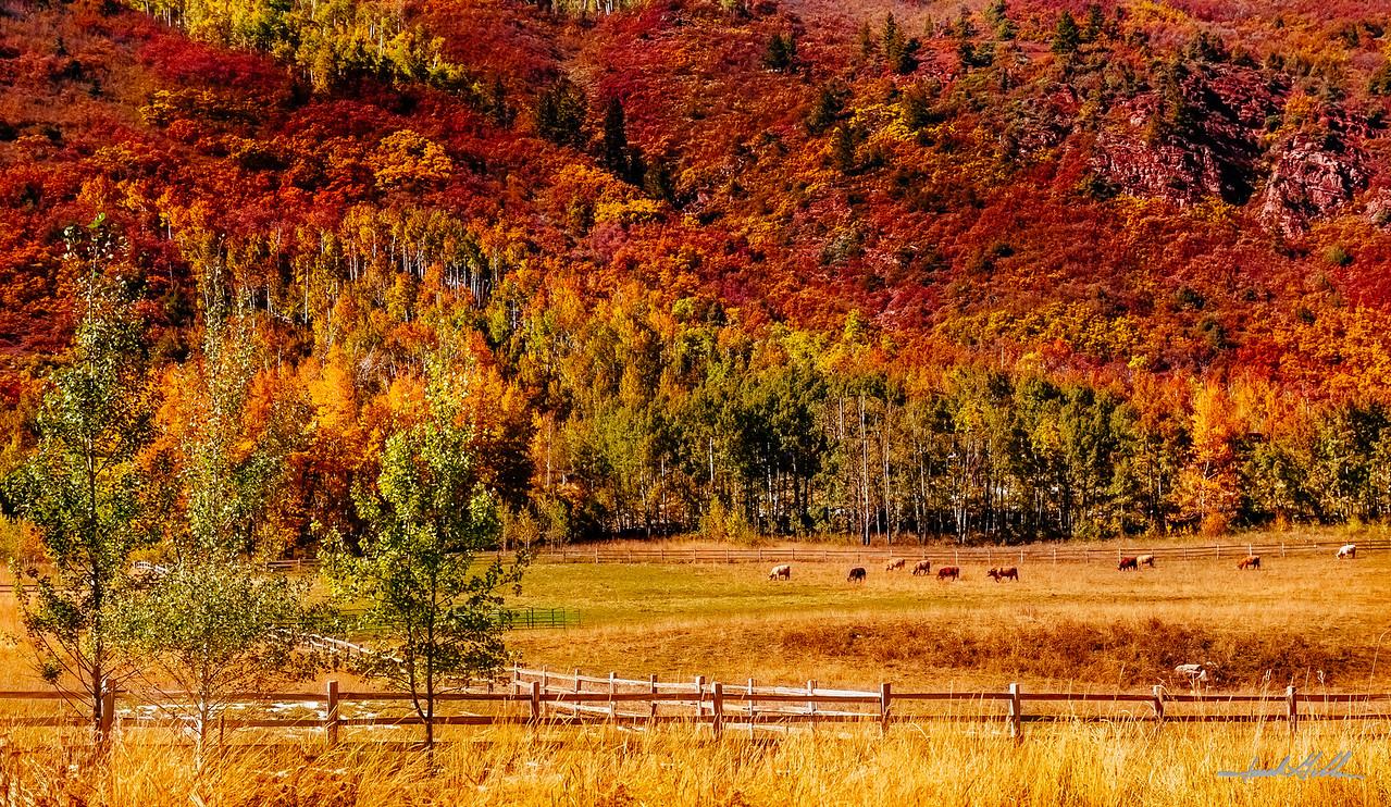 Color on the hillside