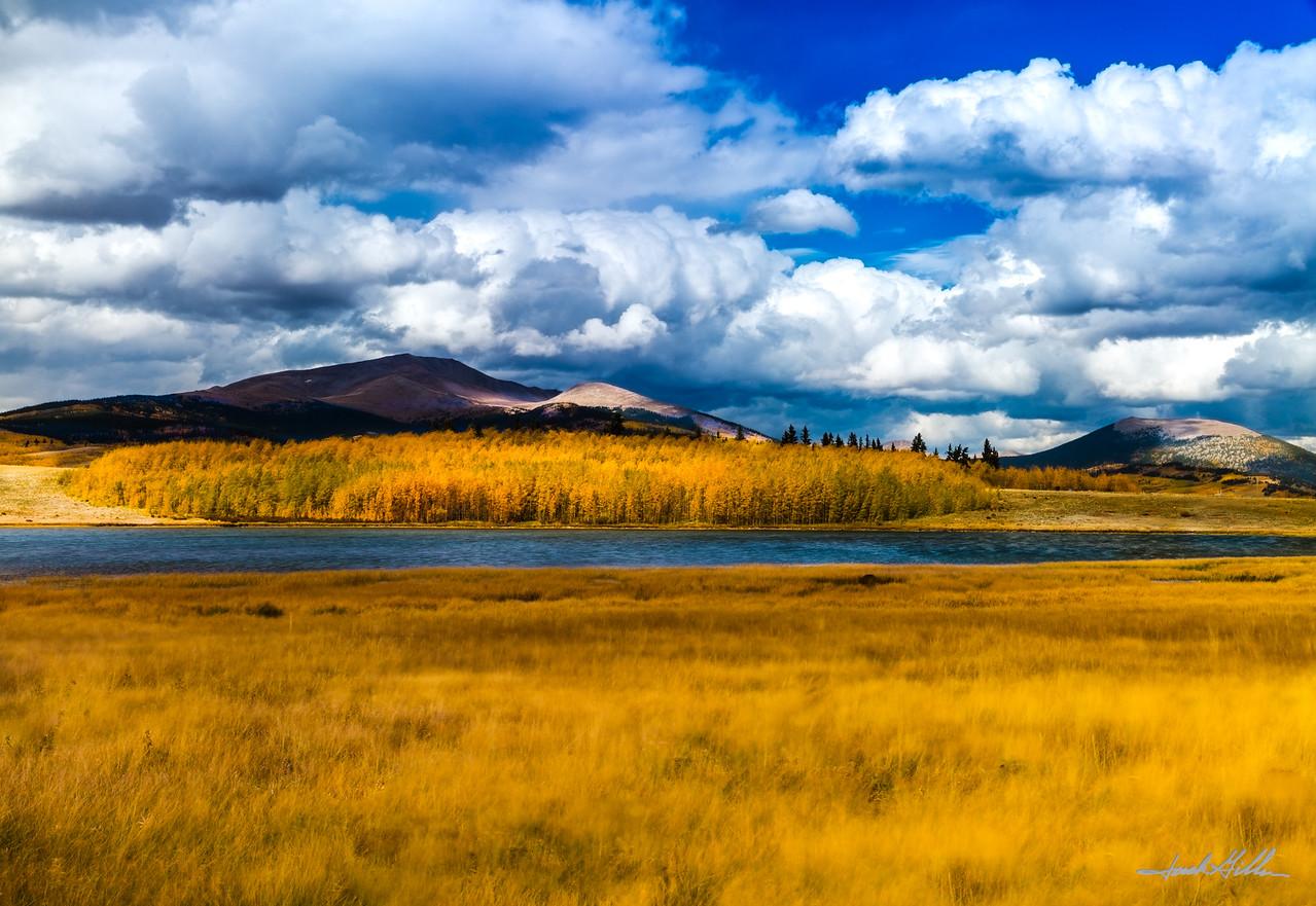 Golden fall colors