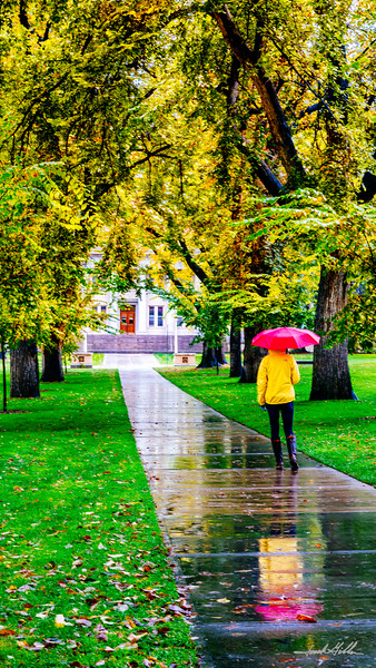 A stroll through campus on  rainy day