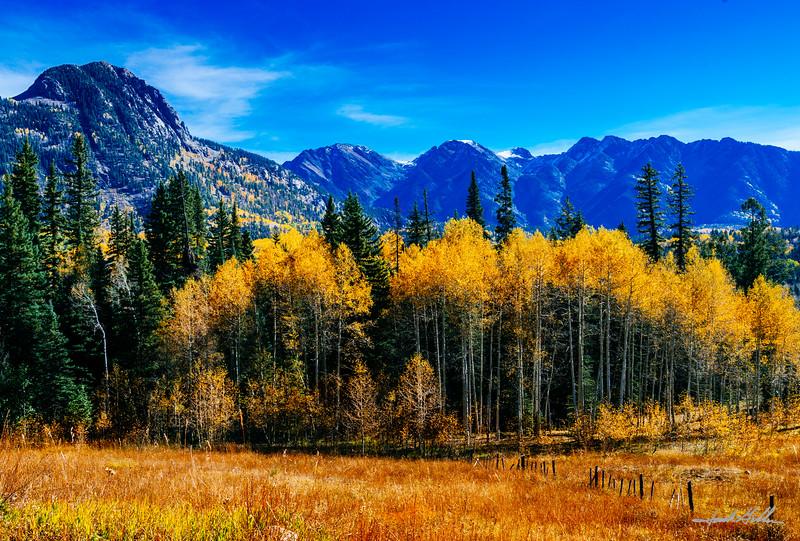 Fall colors near Telluride