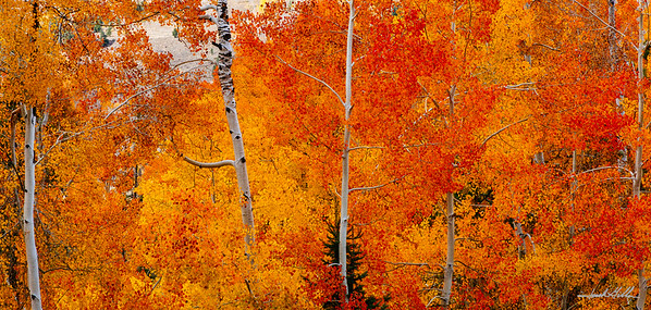 Brillant Fall Colors