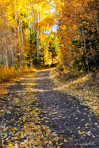 Autumn Colors on a trail Frisco