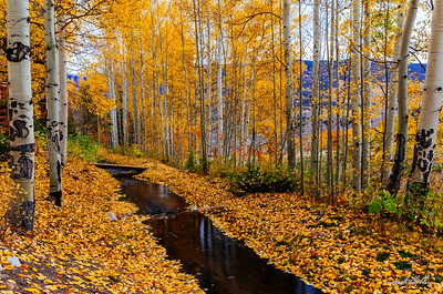 Calm water in a blanket of gold