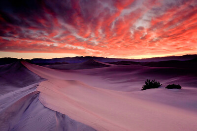Winter Morning, Mesquite Dunes