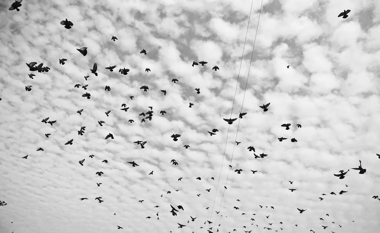 Delhi -2013