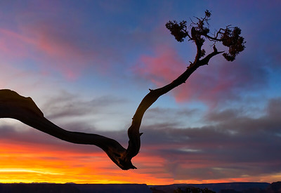 Juniper Branch and Sunset Sky, Grand Canyon