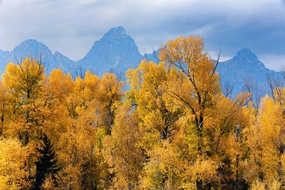 Cottonwoods and Teton Range
