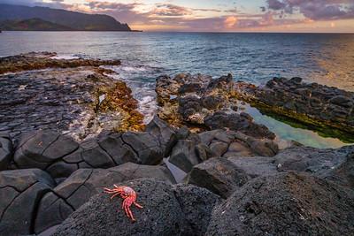 Crab on Lava Rocks