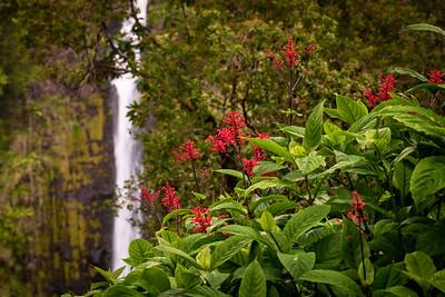 Brazilian Firespike and Onomea Fall