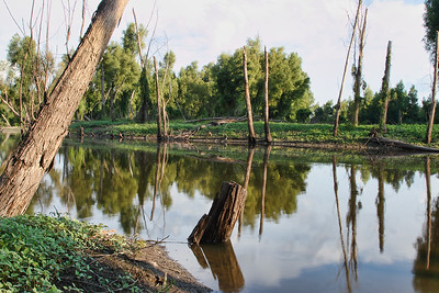Louisiana Bayou in the late afternoon sun... St. Francis, Louisiana