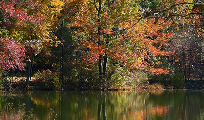 IMG#2978 Alloway Lake-New Jersey Fall 2008