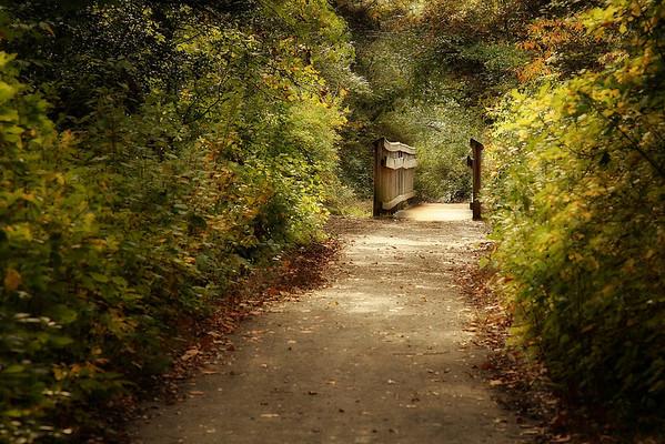 Parvin State Park Walking Path Bridge, New Jersey