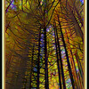 Funky Redwoods