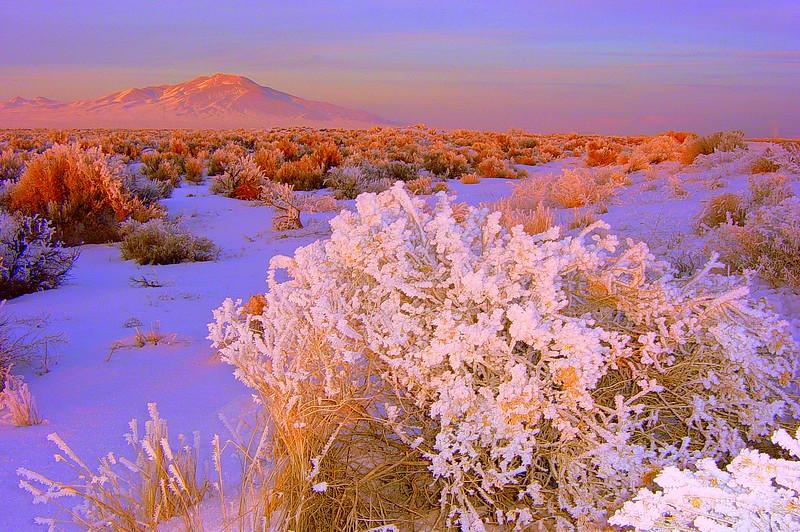 Frozen Desert!