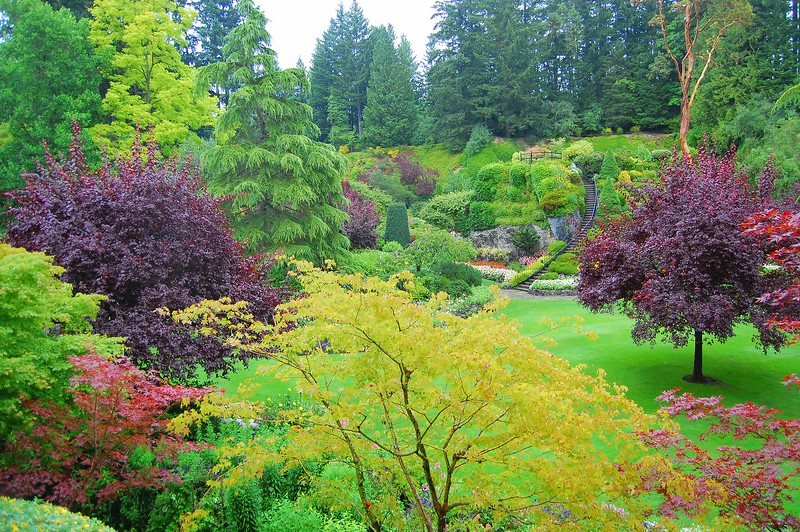Gorgeous Butchart Garden, Victoria, Canada - it was sprinkling rain when I took this photo, so the colors seemed a little more pronounced.<br /> <br /> This photograph is protected by the U.S. Copyright Laws and shall not to be downloaded or reproduced by any means without the formal written permission of L Good - noelxgood@sbcglobal.net