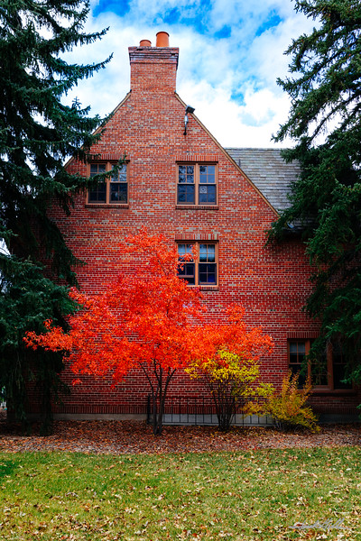 Fall in all it's color, Montana State University