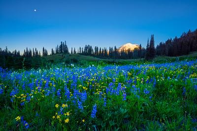 Rainier Wildflowers