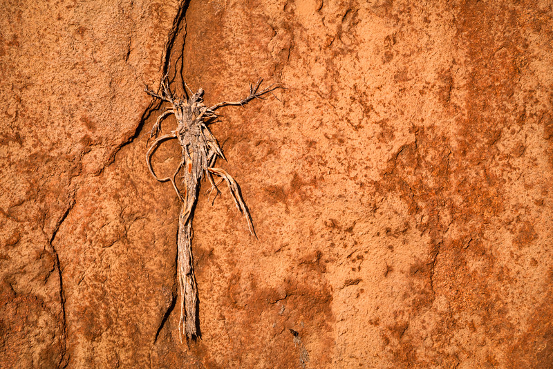 Snag Embedded in Sandstone Wall