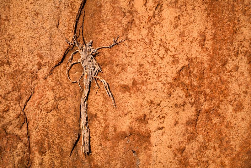 Snag Embedded in Sandstone Wall