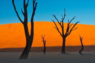 Camel Thorne Trees and Sunset Light, Deadvlei