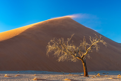 Camel Thorne Tree and Dune 45