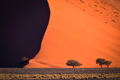 Acacia Trees and Large Dune