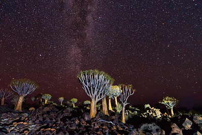 Quiver Tree Forest and Night Sky