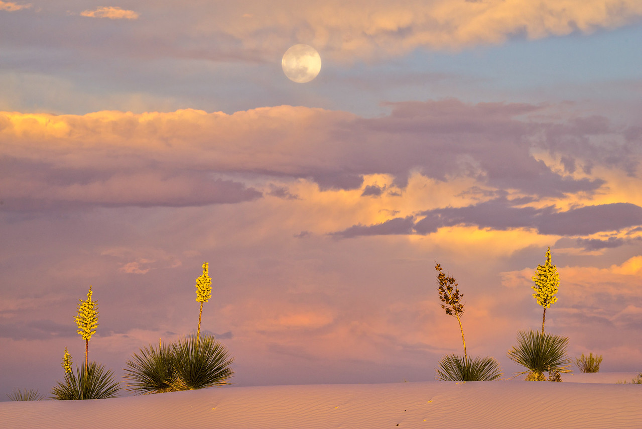 Full Moon Rising Over Yuccas