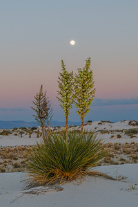 Moon Over Yuccas