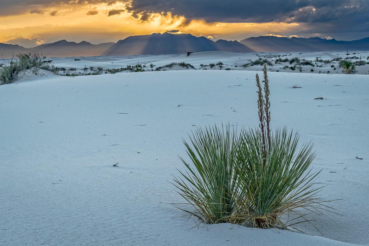 Sun Beams and Yucca