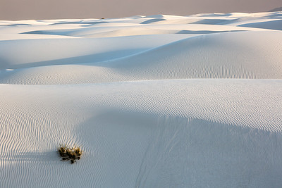 Late Light Across Dunes, White Sands, NM