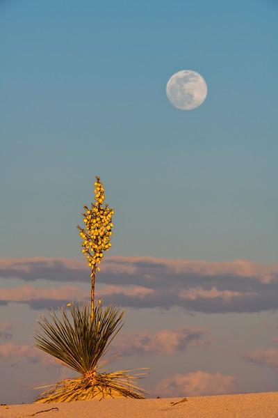 Moonrise Over Yucca